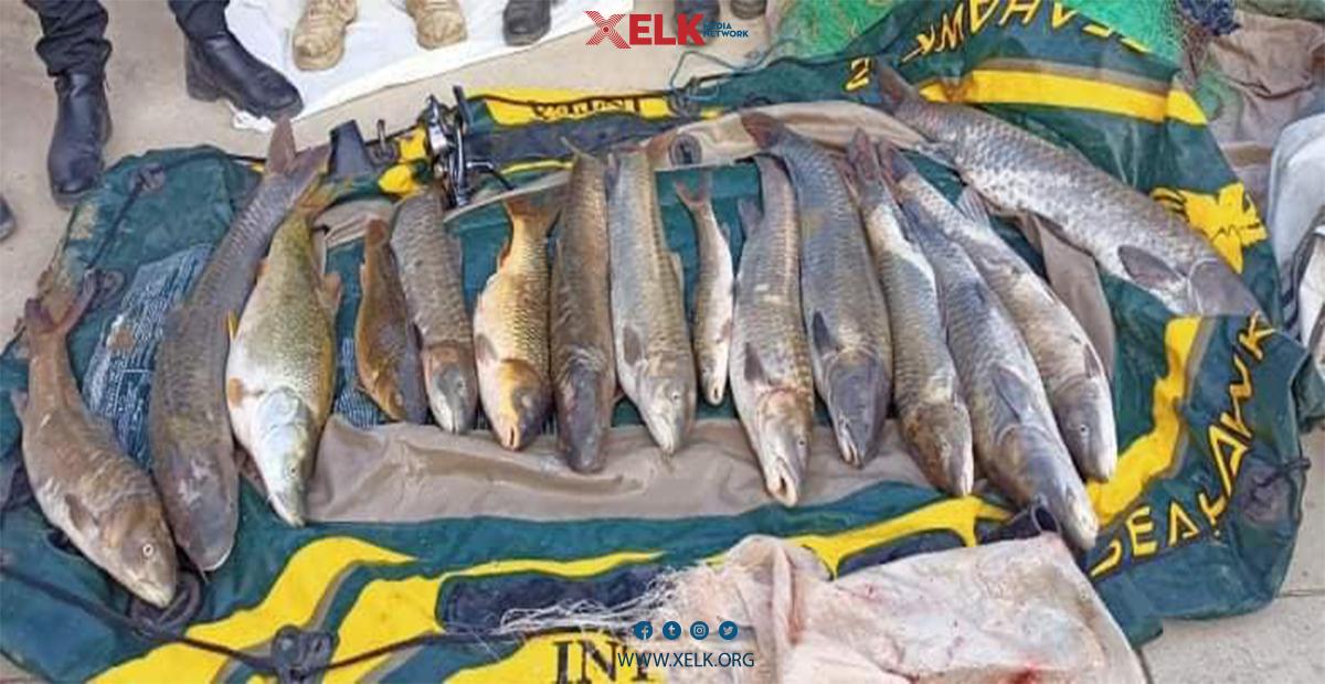 پۆلیسی دارستان و ژینگەی سلێمانی؛ لەكاتی ڕاوی ماسیدا 2 تۆمەتبار دەستگیركران
